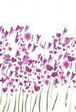 Рулонные шторы - Весна (Амилюкс)